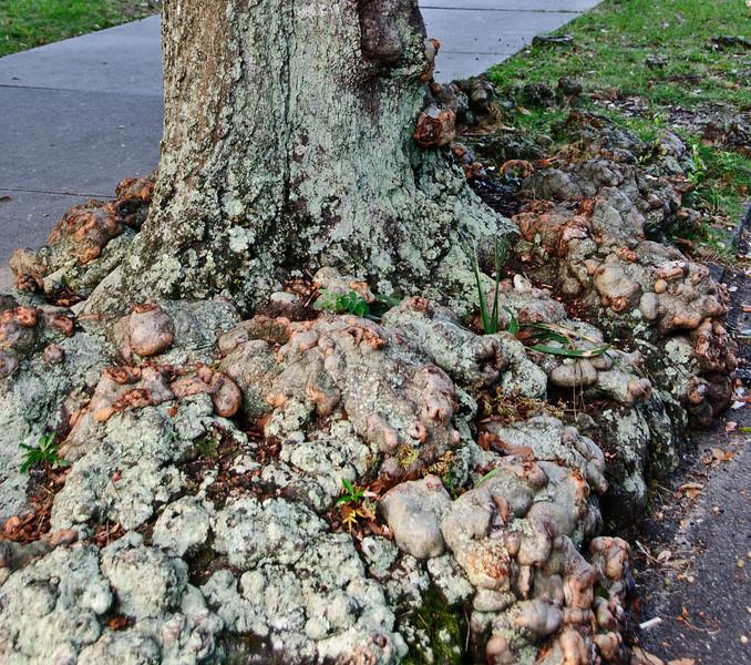 Interesting looking tree trunk
