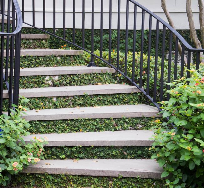 Interesting ivied stairway.