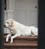 What a nice dog!