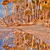 Botany Bay Beach Reflection - Edisto Island, SC