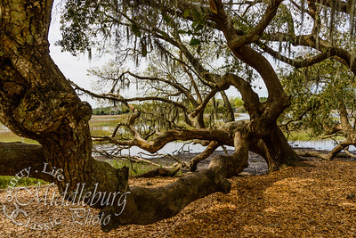 Boone Hall Plantation 2016