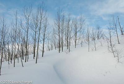 Sur le Sentier du Mont du Lac des Cygnes