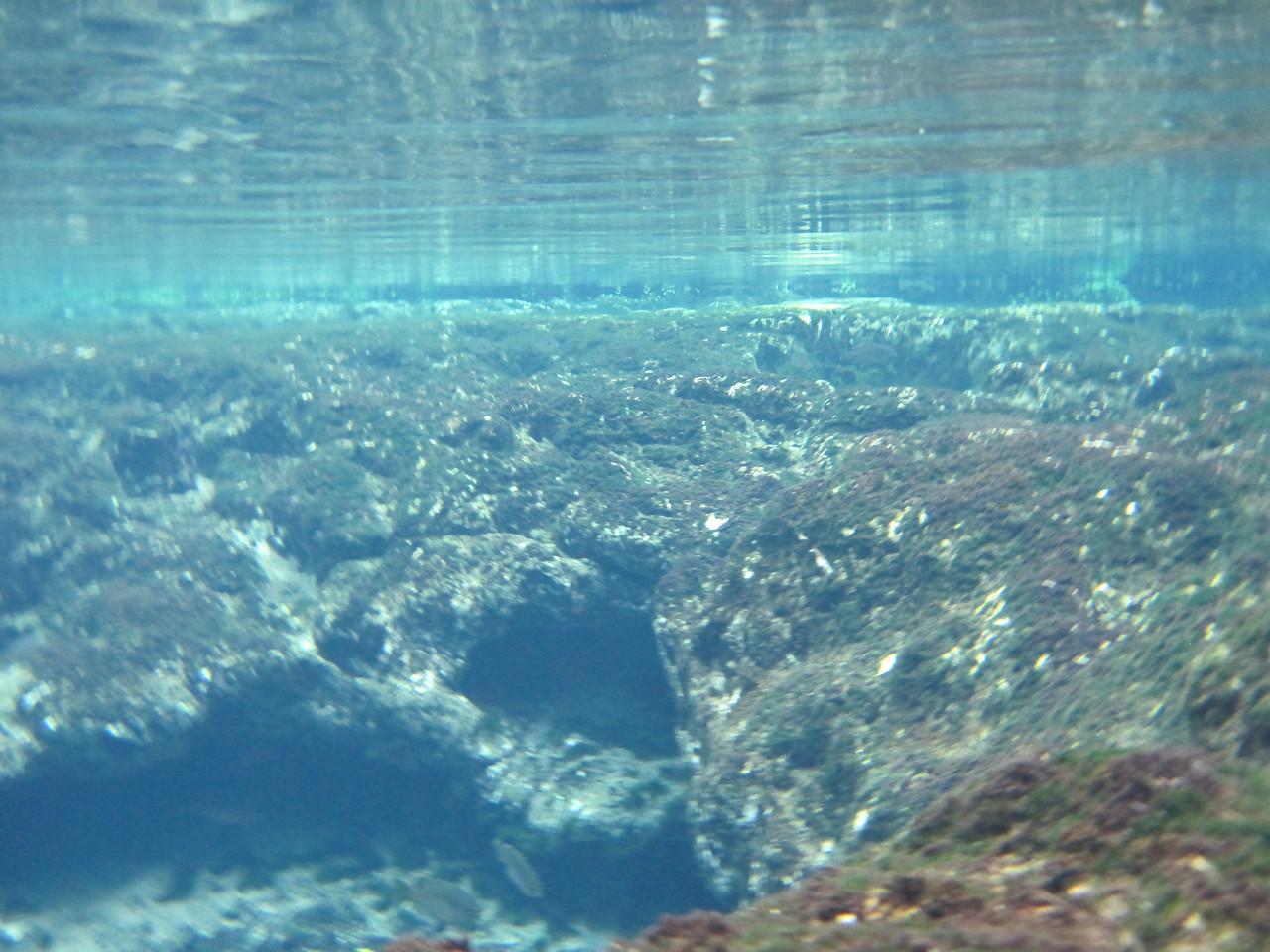 An underwater view of one of the springs.