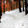 Winter forest light hdr