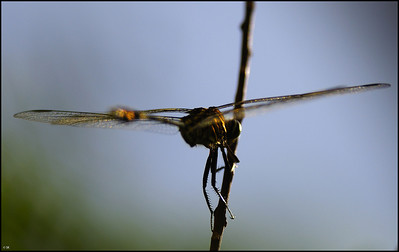 Copter wings....., Dragon fly....