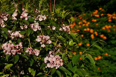 Hooper Bald Nantahala Forest Cherohala Skyway North Carolina