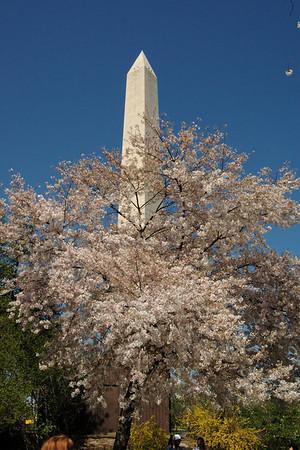 Cherry Blossom Festival - D. C 2010