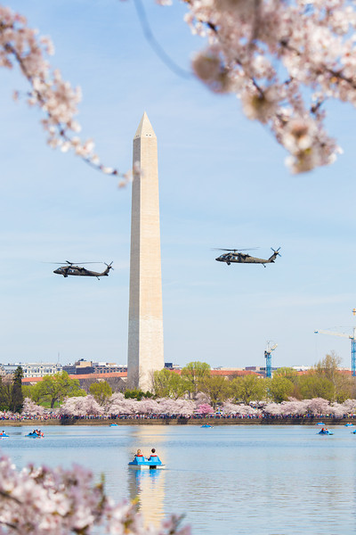 Army Blackhawks fly past the Washington Monument for the Cherry Blossom Parade.