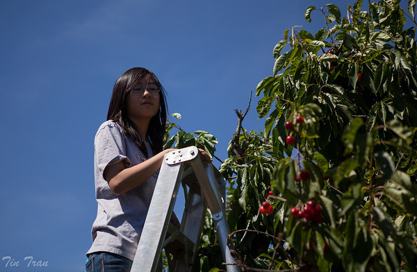 Cherry Picking - 2012