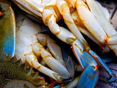 Crabs wet for speriment