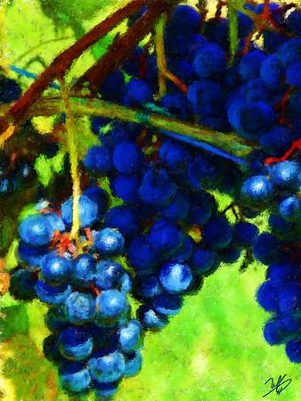 White Fences Grapes