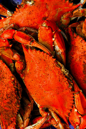 All steamed up and ready to eat, Chesapeake Bays famous Blue Crabs are a culinary delight.