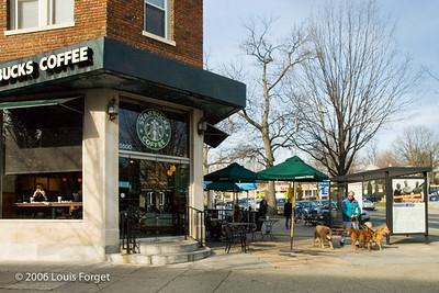 StarbucksDogs