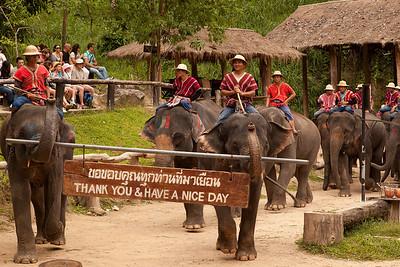 Mae Sa Elephant parade