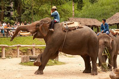 Mae Sa elephant taking a bow