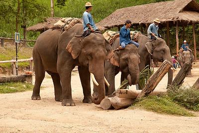 Mai Sa elephants building a wall