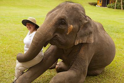 Mai Sa elephant with Patti
