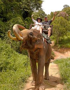 k&p elephant ride
