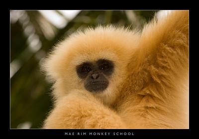 Mae Rim Monkey School
