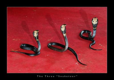 Mae Rim Snake Farm