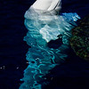 Title: Full Body Submerged<br /> Date: November 2010<br /> Beluga Whale