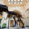 Title: Sue the T-Rex<br /> Date: November 2010<br /> Sue the Tyrannosaurus Rex in teh Field Museum in Chicago.