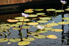 Water lilies and reflections and stuff.
