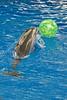 Dalphin Show, Brookfield Zoo