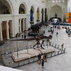 Field museum atrium thingy