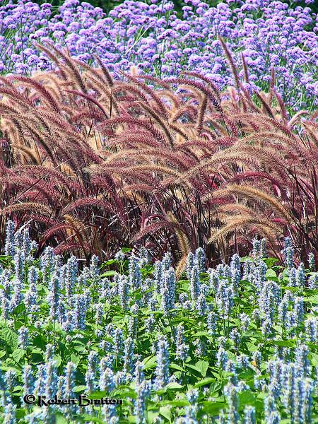 Summer Flowerbed