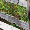 Chipmunk at the Spring Valley Nature Sanctuary, Schaumburg, Illinois