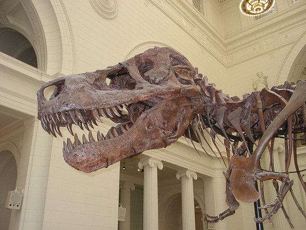 Field Museum - Chicago