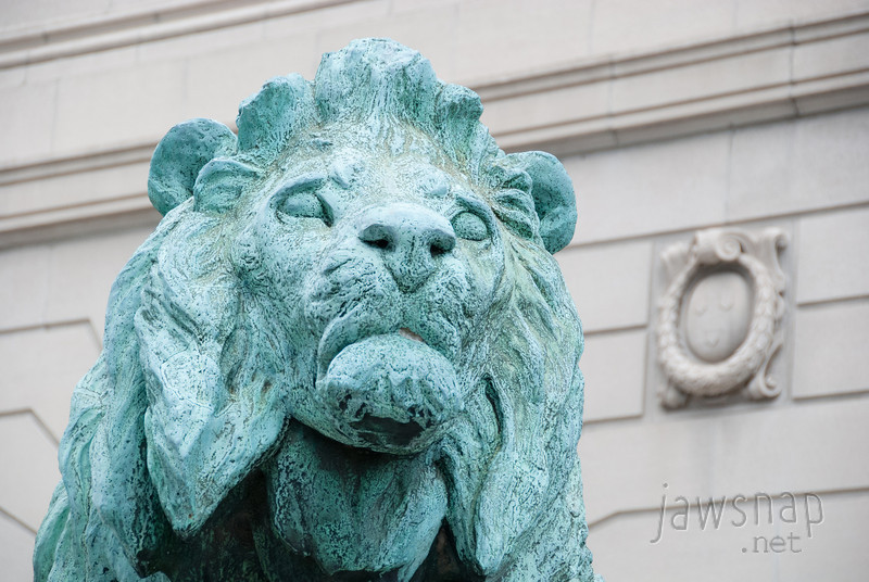 """<span id=""""title"""">Concerned Lion</span> One of two lions guarding the entrance to the Art Institute. He really looks worried to me. I'm not sure why - a 10 foot tall lion shouldn't be afraid of much."""