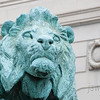 "<span id=""title"">Concerned Lion</span> One of two lions guarding the entrance to the Art Institute. He really looks worried to me. I'm not sure why - a 10 foot tall lion shouldn't be afraid of much."
