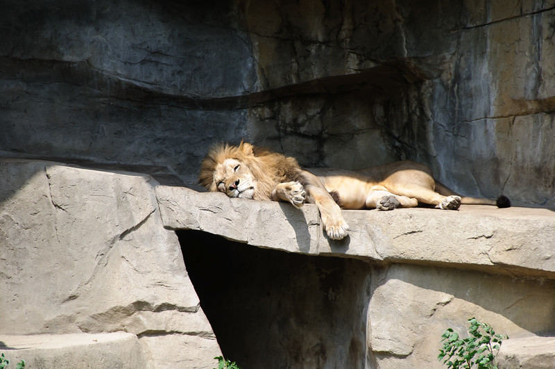 Brookville Zoo, Chicago