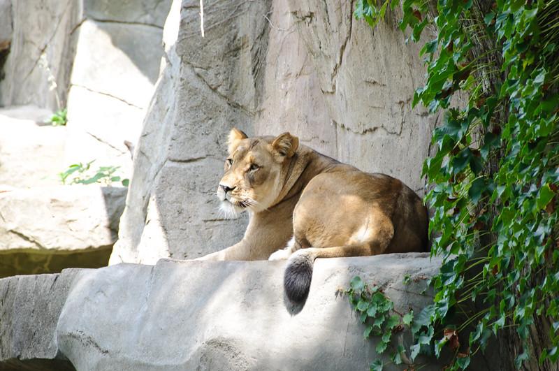 Brookville Zoo, Chicago