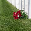 Grave Flowers