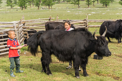The grandchildren tended to a yak