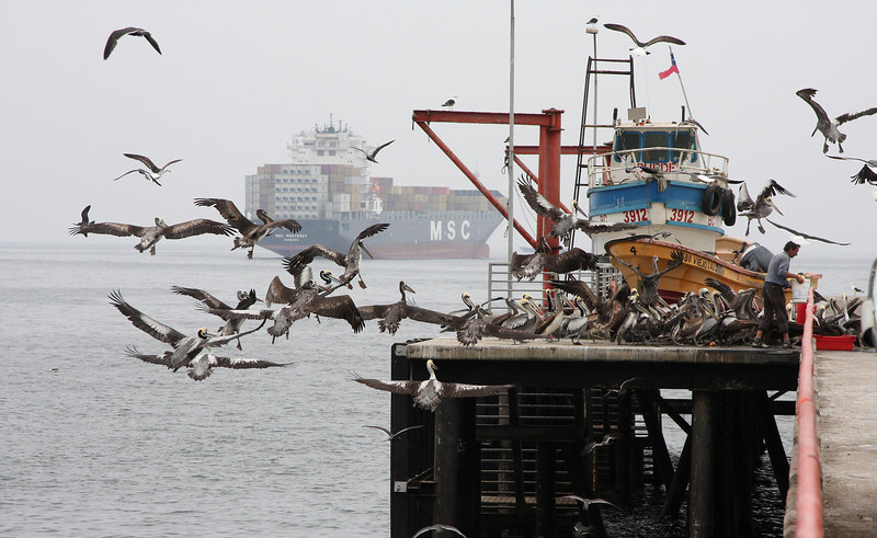 Valparaiso harbor with its pelicans