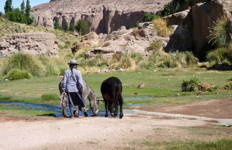 Caspana - old indio woman guarding her two donkeys