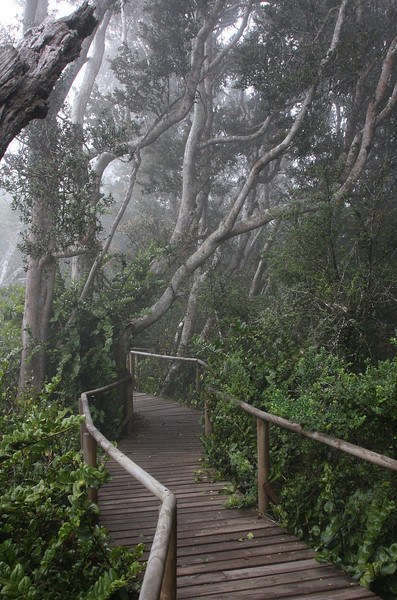 Rain forest in Fray Jorge national park just a couple of kilometers away from desert like conditions