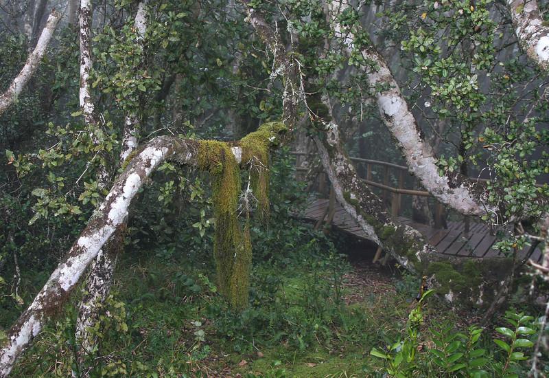 Fray Jorge rain forest