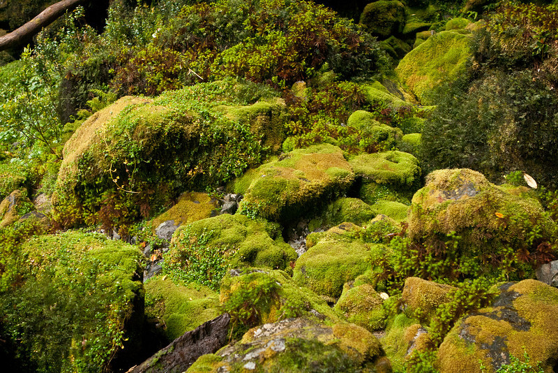 The rocks were covered with a thick padding of moss.