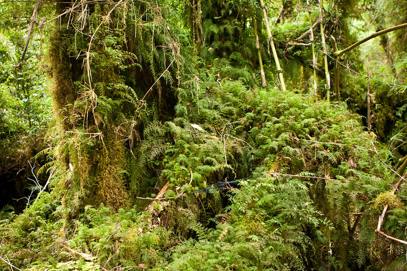Everything was soft in this rainforest. Not like the Amazonian forest where you have to contend with many things that stick or bite.<br /> <br /> Trail to the cascadas at Caleta Gonzalo. This was an awesome trail.