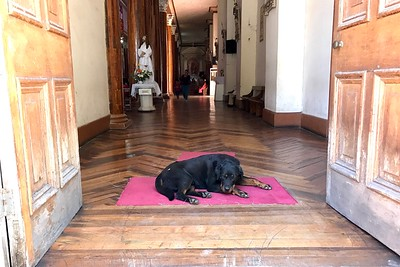 Stray Dog in Church in Vinuna