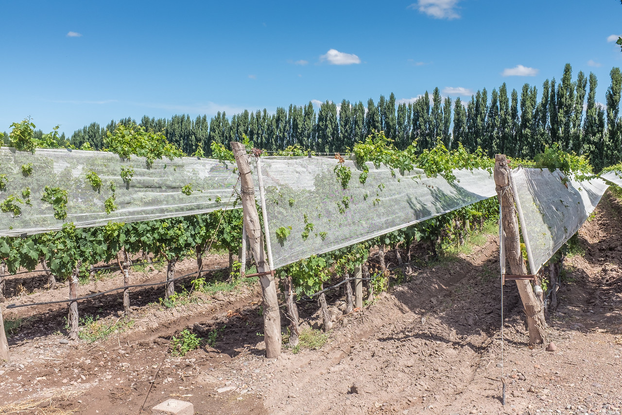 Bodega Dominio del Plata, Susana Balbo Wines, Lujan de  Cayo, Mendoza