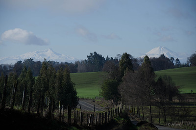 Volcan Lonquimay (right) & Volcan Toluaca (left)  located near the Parque Nacional Conguillio east of Temuco, Chile
