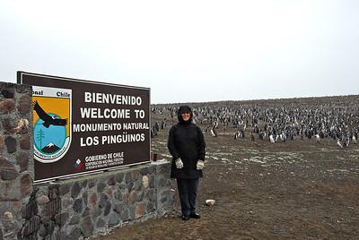 Tres Puentes A Pinguinera Isla Magdalena