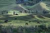 Easter Island-6514