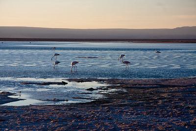 Tierra Atacama flamingos-2